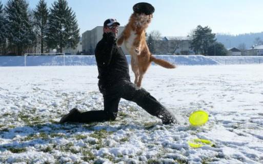 Hundefrisbee im Schnee