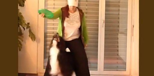 Anleitung Hundetrick Einparken