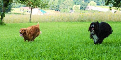 Hunde Spiele: Hunde rennen
