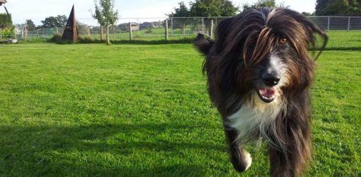 Hunde wollen rennen und Spass haben