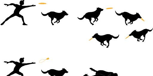 Hundefrisbee ist gesünder als der Kong