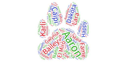 Hundenamen und die Bedeutung