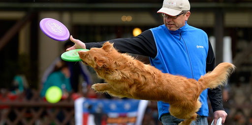 Hund zeigt DiscDog-Trick Reverse