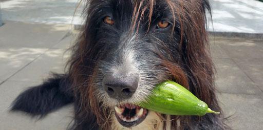 Sam bekommt jeden Mittag Gemüse oder Früchte