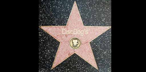DiscDogs auf dem Walk of Fame