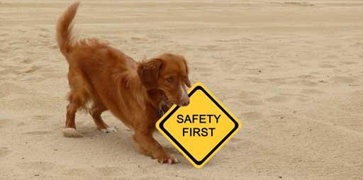 Sicherheit im Hundefrisbee