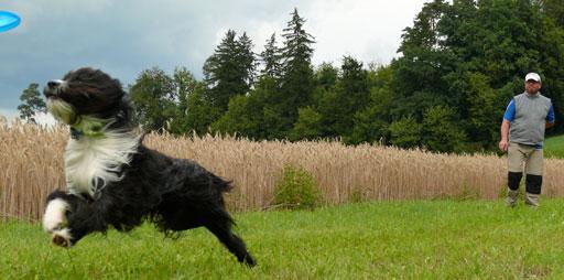 Hundefrisbee-Anleitung in 9 Schritten
