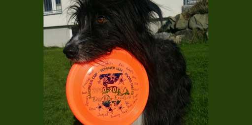 DiscDog hält eine Hundefrisbee im Fang.