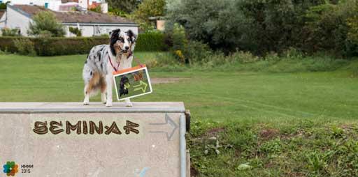 Hund zeigt auf Frisbee-Seminar