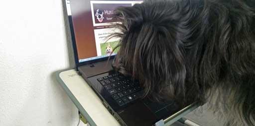 Hund vor Laptop