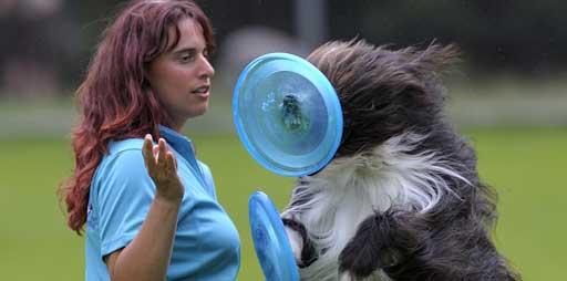 Anfänger spielt Hundefrisbee
