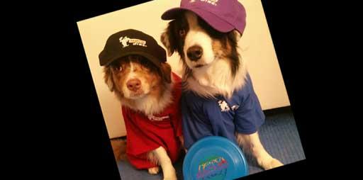 Hunde tragen Shirt und Capi von Hero Disc USA