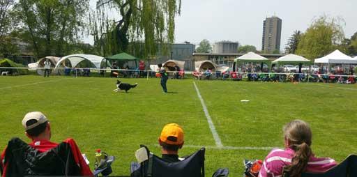 Hundefrisbee Turnier Sandreas-Cup