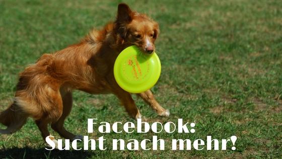 Hundefrisbee im Facebook