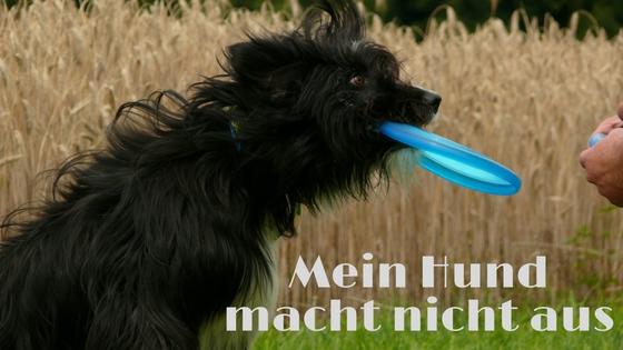 Hund macht nicht aus