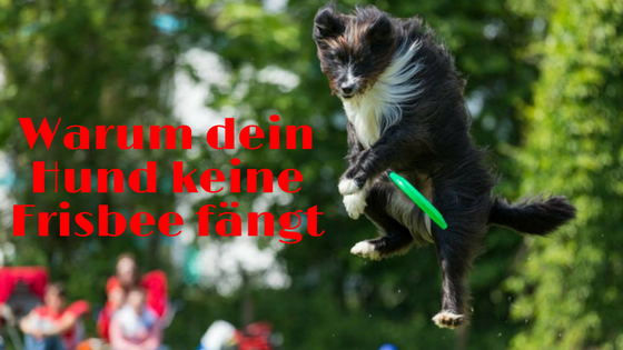 Hund fängt Frisbee nicht