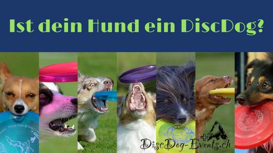 Welche Hunderasse für Hundefrisbee