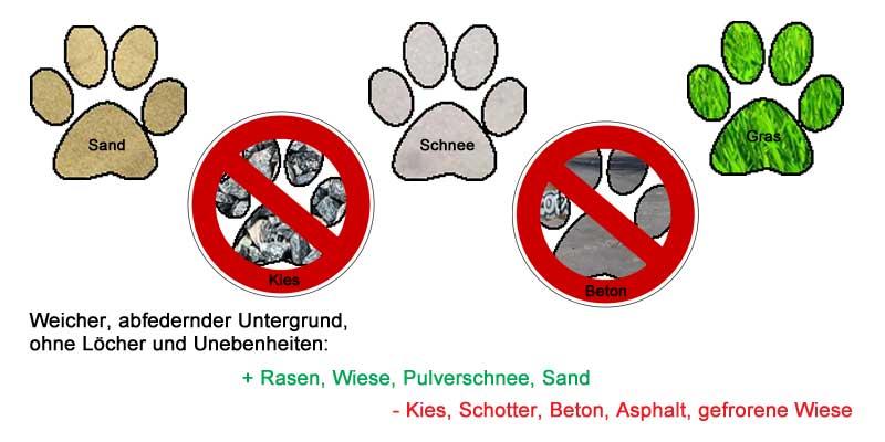 Spiele kein Hundefrisbee auf Beton
