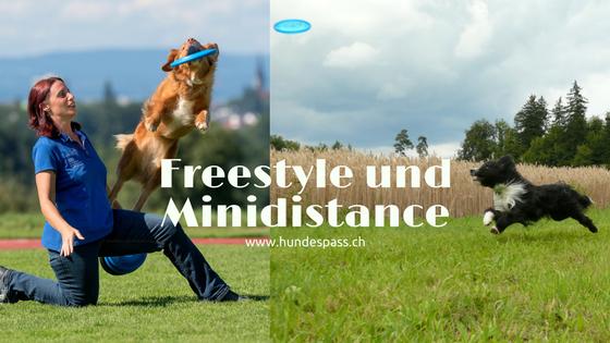 Hundefrisbee Freestyle und Minidistance