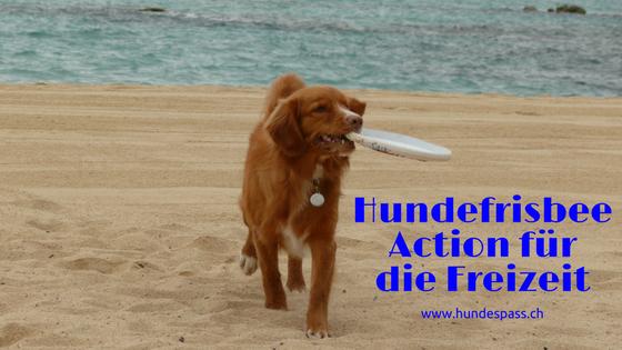 Hundefrisbee in der Freizeit
