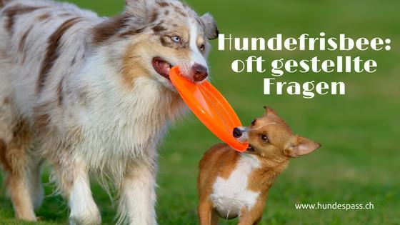 Grosser und kleiner Hund mit Frisbee