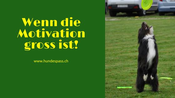 motivierter Hund fängt Frisbee