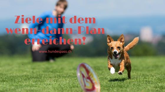 Hund rennt Frisbee nach