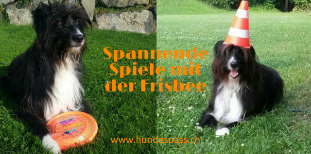 Frisbee-Spiele mit dem Hund